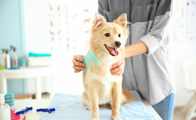 Properly Grooming Dogs with Long Coats