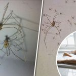 Key Areas to check for Spiders in a Home