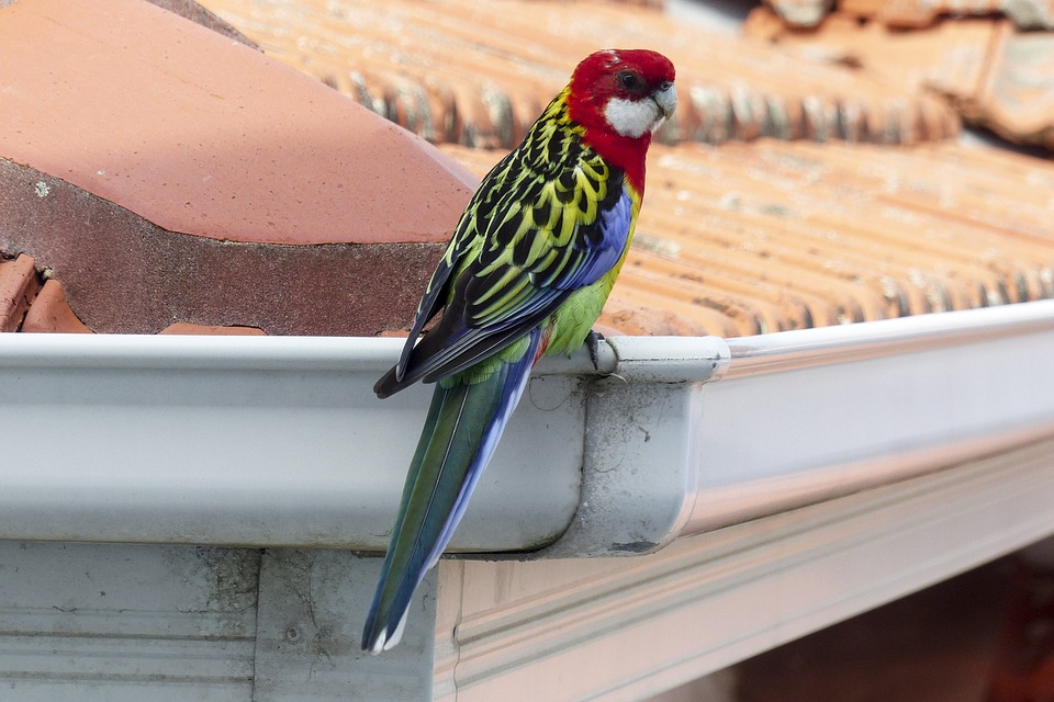 5 Reasons Why You Need to Clean Your Gutters